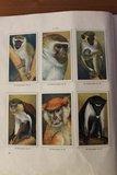 Verkade verzamelplaatjes album Apen en hoefdieren in Artis 1940_