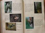 Oud brocante verzamelplaatjesboek Faunaflor Côte d'Or 1952_