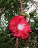 Decoratieve stoffen bloem rood fluweel, glitter & kant_