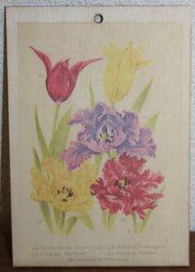 Brocante botanische schoolplaat op hout tulpen bloemen 17,5x12 cm