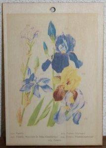 Brocante botanische schoolplaat op hout irissen bloemen 17,5x12 cm